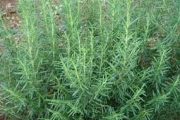 Os orixás e suas ervas