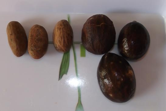 Orogbojaca a mais nova semente