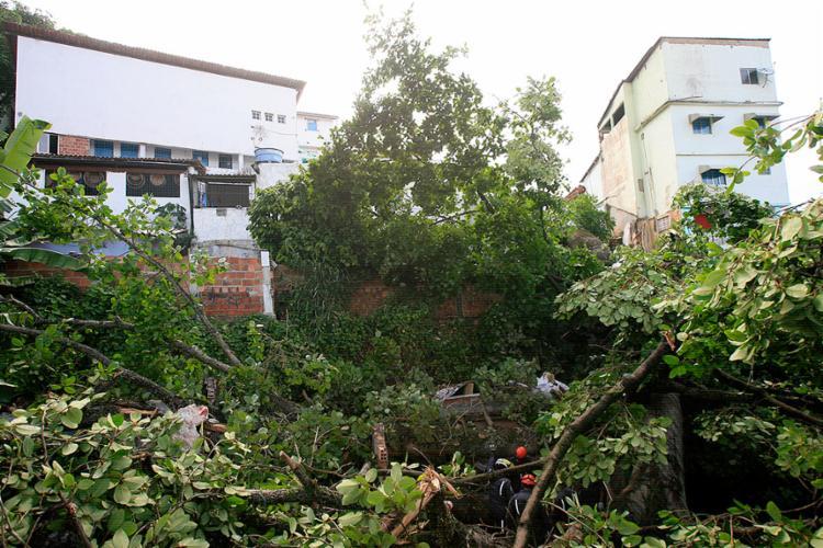 A queda de um Iroko (árvore sagrada) do Ilê Axé Mariolajé matou a idosa na madrugada desta sexta, no Matatu de BrotasEdilson Lima l Ag. A TARDE