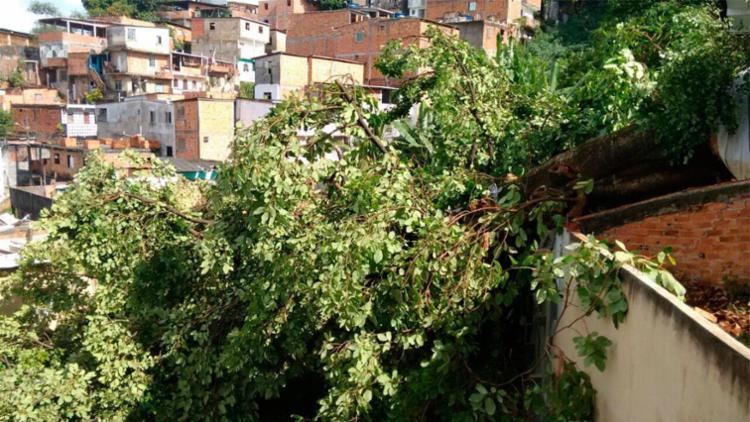 Árvore atingiu quatro casas em Luiz AnselmoEdilson Lima | Ag. A TARDE