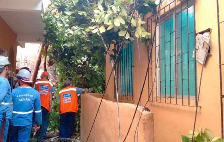 Moradores temiam acidentes envolvendo a árvore (Foto: Edilson Lima | Ag. A TARDE)