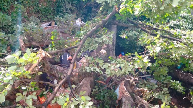 Membros de terreiro alegam que árvore foi atingida por raio (Foto: Edilson Lima | Ag. A TARDE)